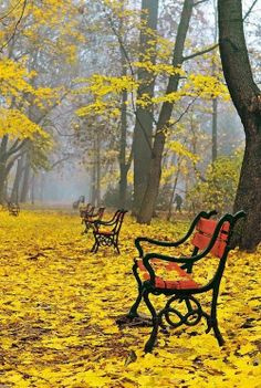 Autumn scene of park benches covered in fallen yellow  leaves (Poland).