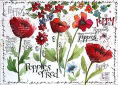 Martha Lever, poppy. Nature, journal, sketchbook, notebook, dairy, words and images, drawing.