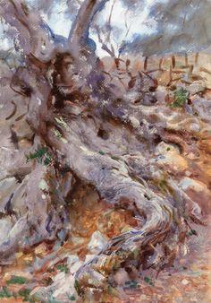 The Athenaeum - Olive Trunk (John Singer Sargent - ) 1908