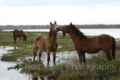 Items similar to Wild horse kiss Horses wildlife fine art photography, Vet gift, Friends. Horse photo, Kleinmond South Africa wild horses on Etsy Provinces Of South Africa, African Animals, My Land, Wild Horses, Africa Travel, Horse Riding, 6 Years, Wildlife, Fine Art