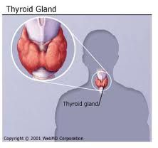 The thyroid stimulating hormone (TSH) blood test is used for testing any disease related to the thyroid gland. A TSH test is used to measure the thyroid hormone that is in the blood. Types Of Thyroid, Thyroid Diet, Thyroid Gland, Thyroid Hormone, Thyroid Health, Graves Disease Symptoms, Enlarged Thyroid, Hypothyroidism Symptoms, Thyroid Medication