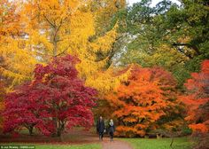 Red, yellow and orange: The National Arbouretum in Westonbirt has 17 miles of accessible paths and five national collections