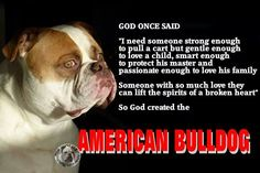 Please respect breed change your mind join breed don't judge or trash one breed so damn bad that nobody would want them at all please stop the hate love them BC they are always someone and never something all animals lives matter nit just one breed all breeds please American Bulldog.