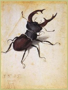 Cervus Lucanus - Albrecht Durer