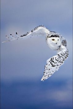 owl pictures (3)