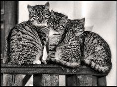 Cats by dwukolorowo.deviantart.com on @deviantART