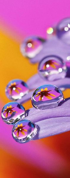 Refracting image of a daisy thru a water drop