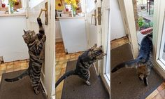 Cat can let herself out after learning how to open door | Daily Mail Online