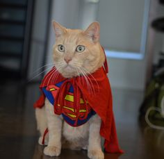 25 Pets with capes