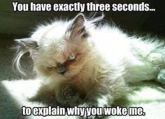 Animal Memes - Why did you wake me? - Funny Memes