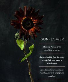 Flower Glossary: Sunflower - Design*Sponge