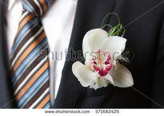 """Képtalálat a következőre: """"cymbidium orchid groom"""""""