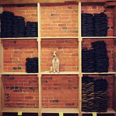 With all the sandals we've been shipping out these days, it's a good thing we have Yogi to help us keep track of them all!