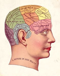 phrenology Vintage Clip Art, Vintage Images, Vintage Ephemera, Vintage Pictures, Vintage Photographs, Vintage Style, Tarot, Anatomy Head, Brain Anatomy