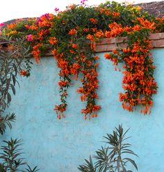 Todos Santos wall  http://www.liquidretreats.com/the-destination-2/the-destination/