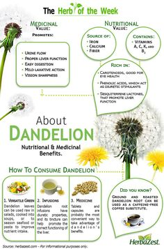 Dandelion Infographic: Dandelion<br> Infographic: Dandelion contains all you need to know about dandelion! This herb provides considerable amounts of vitamin A, calcium, and potassium. Natural Health Remedies, Natural Cures, Natural Healing, Herbal Remedies, Home Remedies, Natural Diuretic, Vitamin A, Iron Vitamin, Calendula Benefits