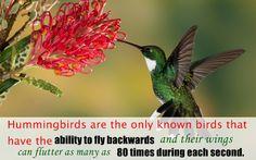 Do you know these phenomenal specifics about birds?? #Hummmingbirds #lovebirds #birds #amazingfacts #weekendmania #enjoyweekendwithyourfamilyandpets #pets #petpawworld #relaxing #and #happyweekend
