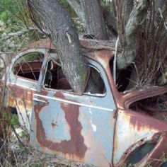 Amazing Rusty Finds - #searchlocated - bug tree