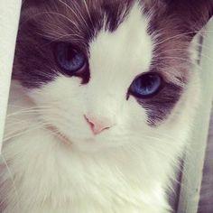 beautiful eyes 2