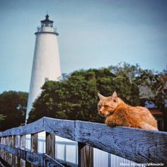 Cat hanging out near Ocracoke Lighthouse on the Outer Banks of North Carolina.