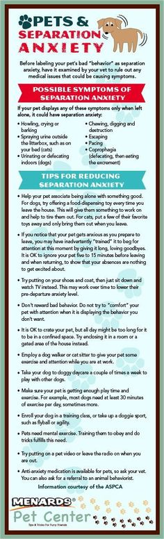 Traveling with or without your pets can be stressful for both parties. Recognize the possible symptoms and learn how to manage your pet's separation anxiety.  http://www.menards.com/main/c-19299.htm?utm_source=pinterest&utm_medium=social&utm_campaign=pinsforpets&utm_content=separation-anxiety&cm_mmc=pinterest-_-social-_-pinsforpets-_-separation-anxiety