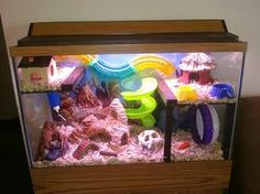 Love this hamster habitat! I especially like the two upper levels joined by the colorful tube! I would remove the aquarium top and add a mesh lid to allow better ventilation though. Hamster Tank, Cage Hamster, Gerbil Cages, Hamster Life, Hamster Habitat, Hamster House, Hamster Stuff, Hamster Ideas, Rat House