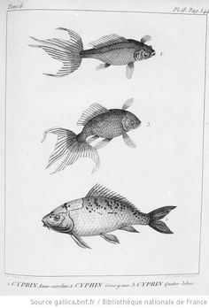 Scientific Illustration #arteducation #scientificillustration Nature Illustration, Botanical Illustration, Sea World, Illustration Botanique, Nature Sketch, Fish Drawings, Nautical Art, Vintage Fishing, Fish Art