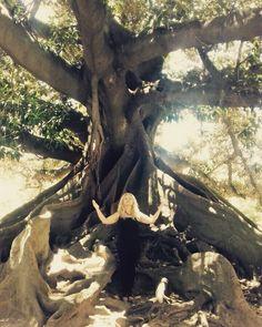 Ombu Rei #greenlove #terapiasnaturales #buenosaires #serenahotel www.amazonsecretsspa.com