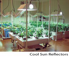 Indoor vegetable farm highlighting Cool Sun Reflectors by Sunlight Supply.
