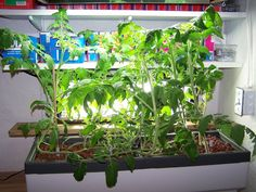 Hydroponic gardening is one of the best ways to grow fresh vegetables year round. Hydroponic gardening is simply a means of growing plants without soil. Learn more in this article.