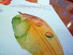 Herbstliche Malreise an die Ostsee | Das passende Papier für Herbstlaub (c) Frank Koebsch