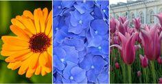 ¡Busca tu flor preferida y disfruta con toda esta información e imágenes!