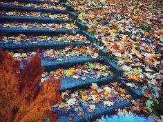 #favseason #novemberfalls #autumnlove #leaves #mykindoflove 🍁🍁🍂🌰🍁