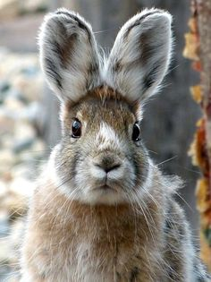 Those ears.. I #wildlife #wildanimals