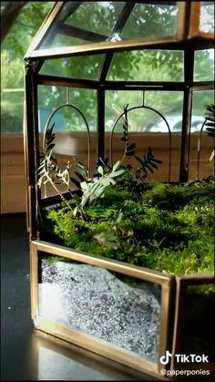 Indoor Garden, Garden Plants, Indoor Plants, Terrarium Diy, Pet Snails, Fleurs Diy, Deco Nature, Paludarium, Terraria