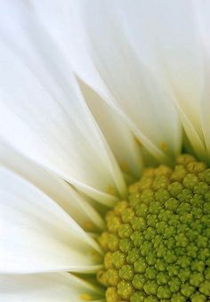 Daisy Abstract | Flickr - Photo Sharing!