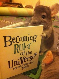 Your book club could open up to new, opinionated members. | 24 Ways Your Day Could Be Ruined By Cuteness