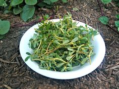 Purslane - Mistakenly called a weed, purslane is a vegetarian's dream food. Modern research has shown that this herb has 5 times the amount of omega-3 fatty acids than spinach.   Every part of the plant is edible...do yourself a favor and sprinkle it in your salad today.