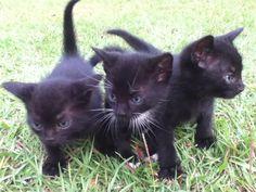 Kittens!!!!!