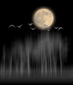 Full Moon Flight) on imgfave Moon Moon, Luna Moon, Moon Art, Over The Moon, Stars And Moon, Moon Dance, Shoot The Moon, Moon Shadow, Moon Pictures
