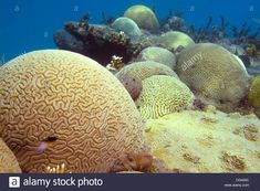 Hard Coral, Brain Coral, Underwater, Caribbean, Landscape, Scenery, Under The Water, Corner Landscaping
