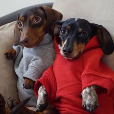 hello do you like our sweatshirts? Awesome ! We're proud you love it ! Allow us know if you have thoughts anyway , we're willing toassist you to : ) Here's my store ==> https://etsytshirt.com/dachshund #dachshundareawesome