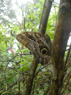 Vlindertuin Lelydorp