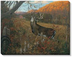"Whitetail Deer Paintings | ... Sieve Open Edition Wrapped Canvas: ""October Ritual – Whitetail Deer"