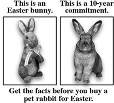 Easter Bunny- great information on the truths of rabbit ownership  intelligent, wonderful creatures & worth knowing what having these amazing creatures in your life requires. they're worth the effort, but they do take effort as do all animals sharing your life!!!