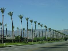 Palm Desert Desert Life, Palm Desert, Desert Colors, Good Old, Palm Springs, Great Places, My Photos, Deserts, Tropical