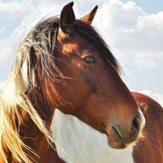 Brown Horse Muzzle