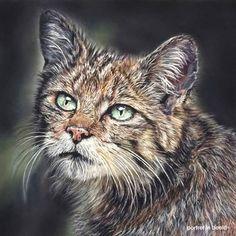 A pastel drawing \'wildcat in the shadows\' on 32x32 cm pastelmat.  #wildlifedrawings #wildlifeartist #realism #animalportrait #animalart #wildlifeart #artistic_unity #softpastel #pastelpencils #realisticdrawings #carandache #animallovers #realisticdrawings #instadraw #instadrawing #artfeedr #artforlife #wacfeature #animal_art_feature