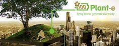 Plant-e: plants generate electricity