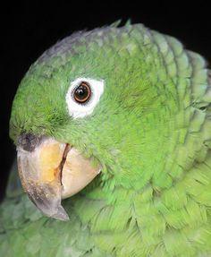 cute_parrot1.0.jpg